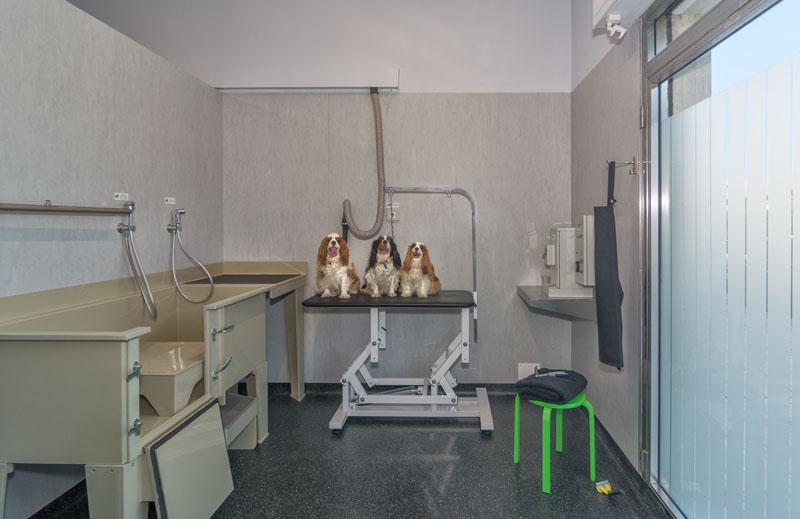 Chi siamo lavaggio cani self e assistito h24 a lido di - Bagno amore lido di camaiore ...